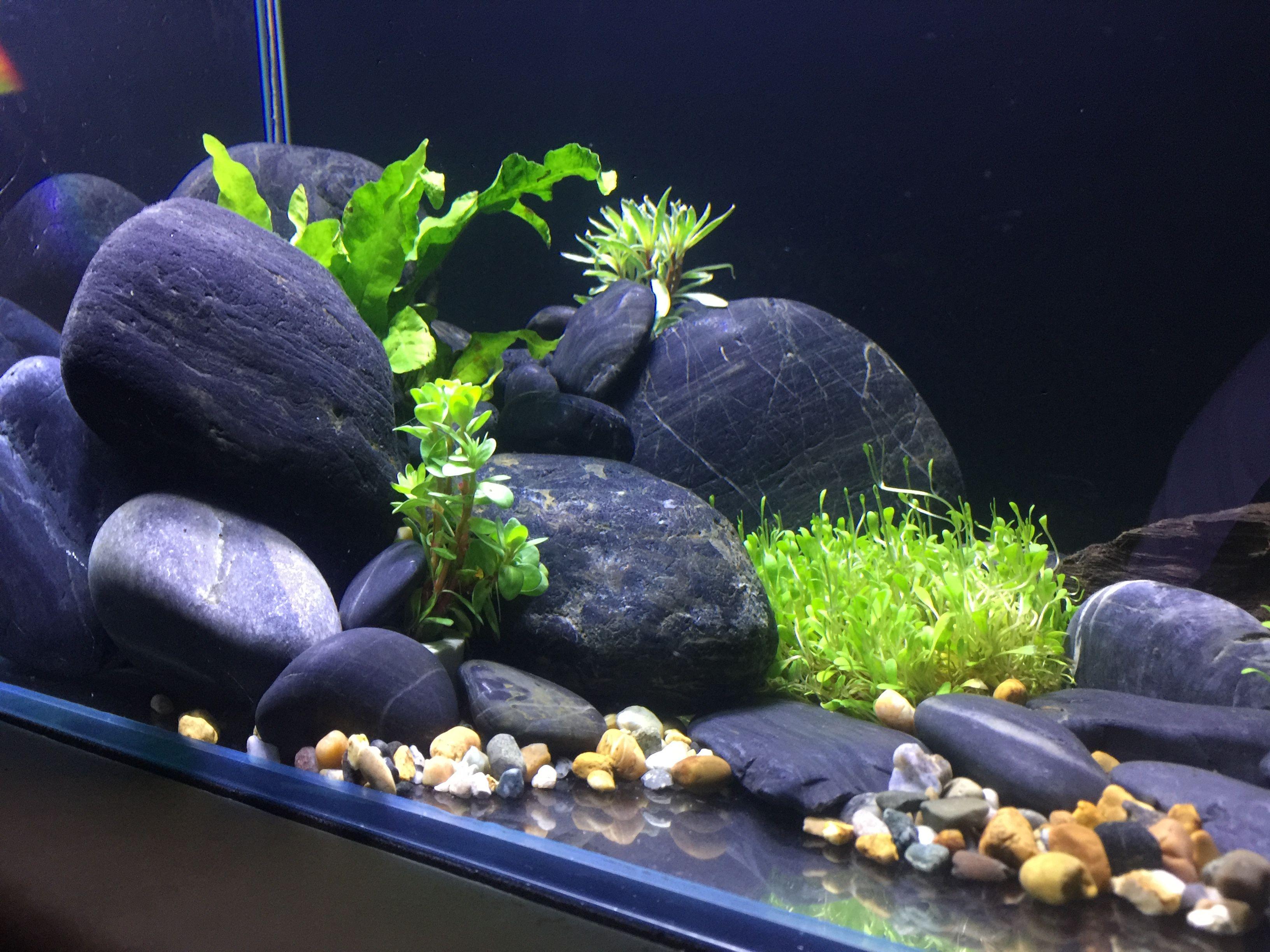 My Simple Fishtank Decoration Driftwood Plants Aquarium