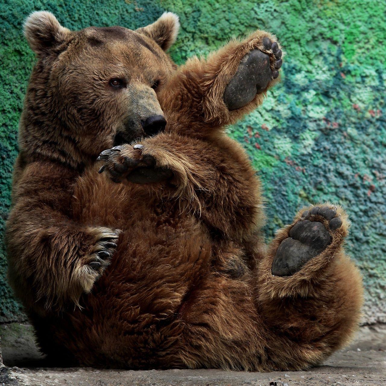 Tumblr Nd4cyj9ux71rcvh74o1 1280 Jpg Izobrazhenie Jpeg 1280 1277 Pikselov Masshtabirovannoe 51 Bear Cubs Bear Bear Wallpaper
