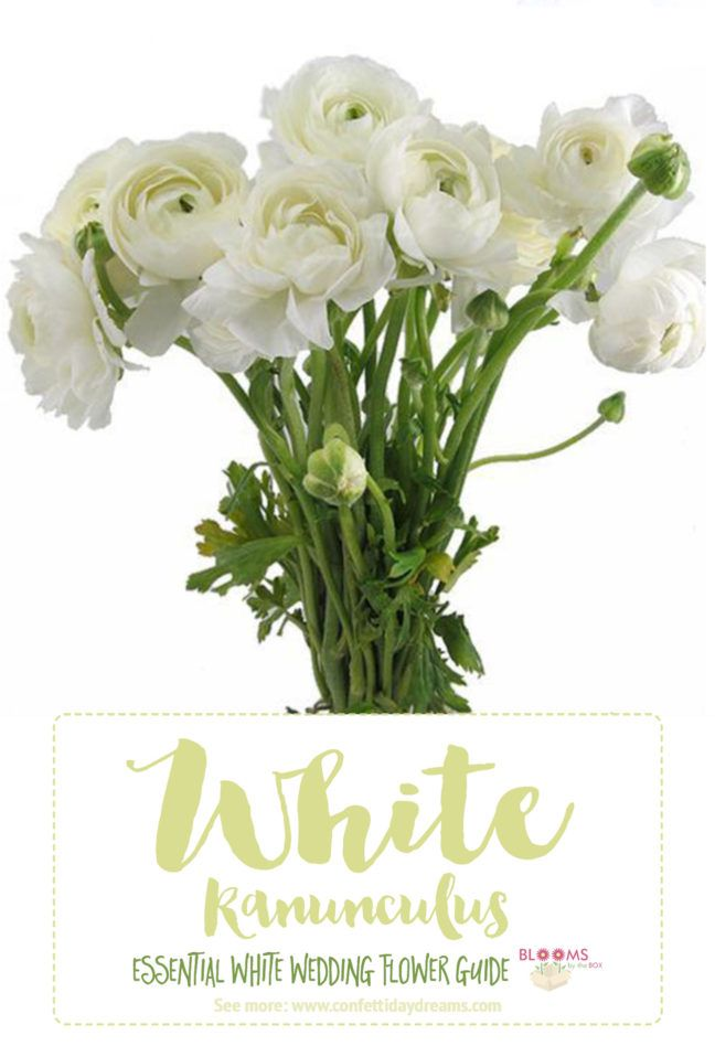 Save This Awesome In Depth White Wedding Flowers Guide For Types Of Names And Pictures Plus Season Style Info