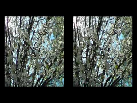 3D video traveling through North Carolina in the Springtime.