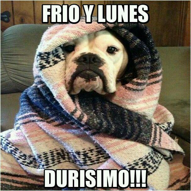 Frio Y Lunes Feliz Lunes Chistoso Memes De Buenos Dias Memes De Frio