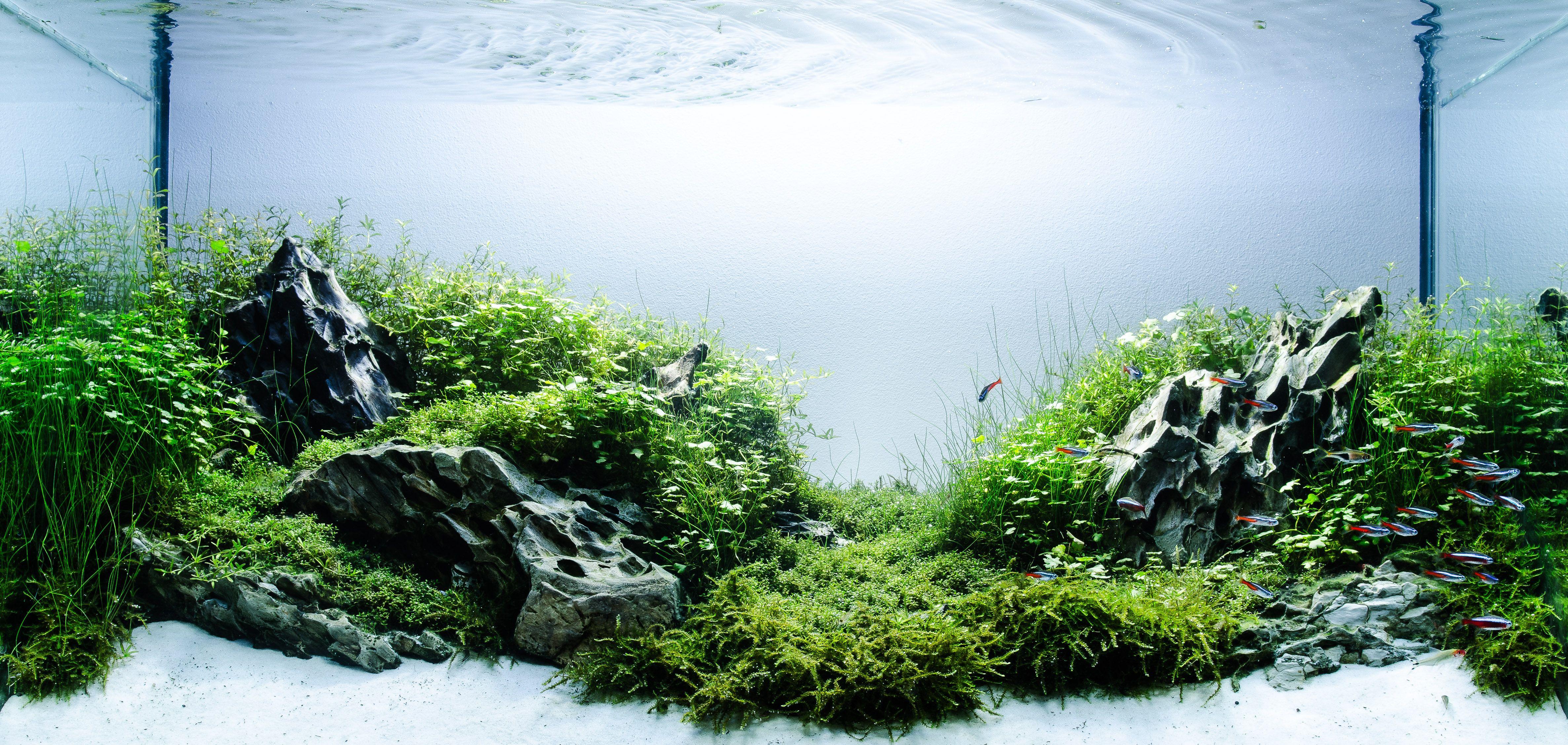 Fish for natural aquarium - Aquascaping Basics Planted Aquarium Substrate