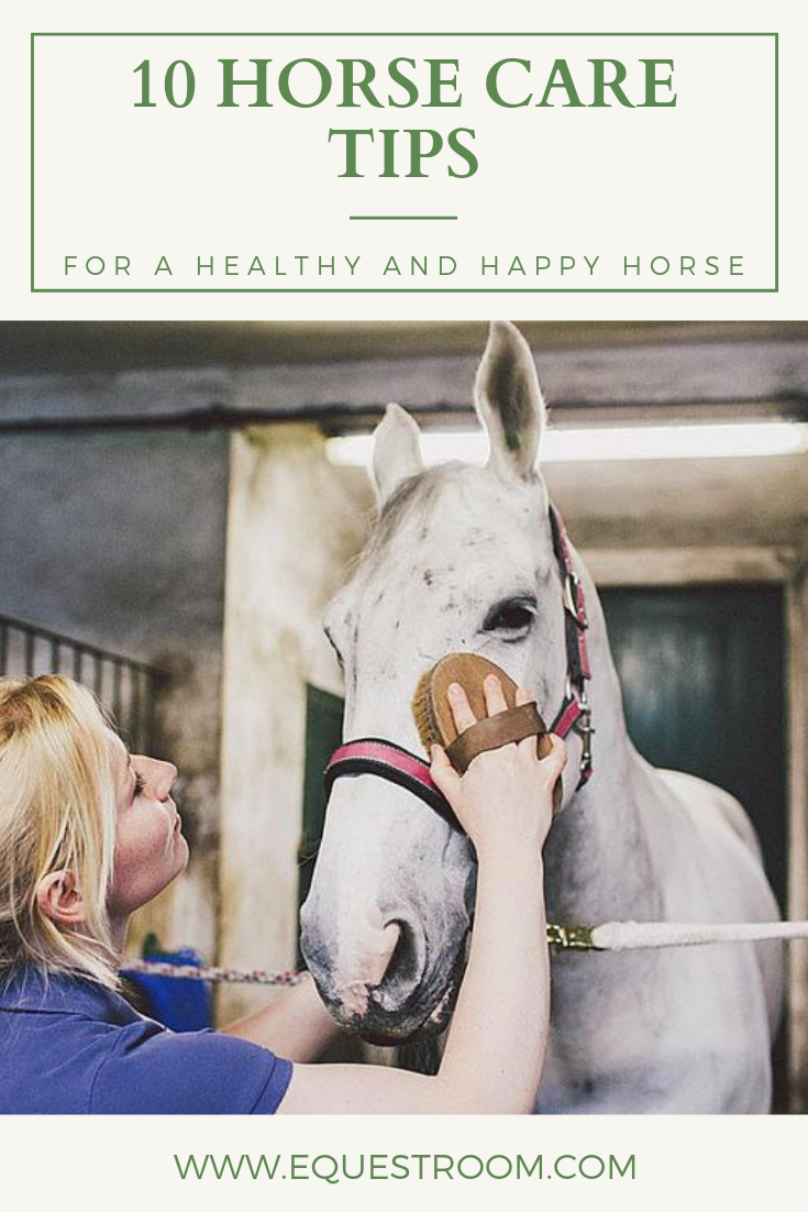 10 Horse Care Tips And Tricks Horse Care Tips Horse Care Horses