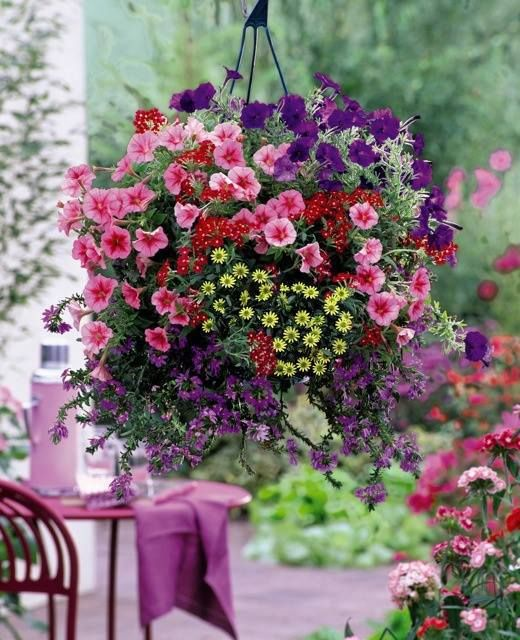 Garden flowers in pots baskets etc board full of for Colorful hanging planters