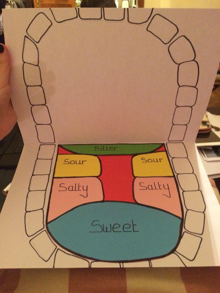 medium resolution of diagram of tongue for children the five senses