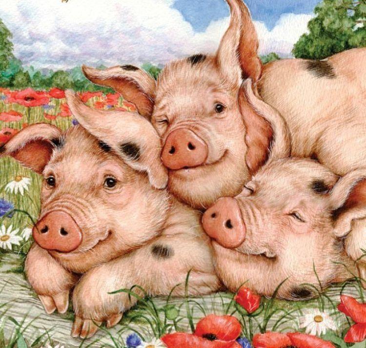 Открытка свиньи