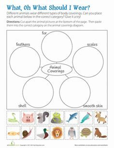 animal body coverings education science worksheets grade 2 science science notebooks. Black Bedroom Furniture Sets. Home Design Ideas