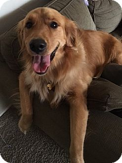 Pin By Harold Lucas On Golden Retrievers And More Pets Dogs
