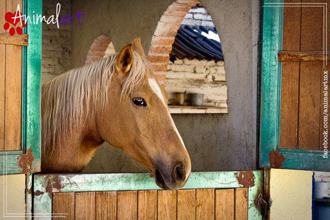Equinoterapia: Caballos que nos ayudan a sanar física y emocionalmente | Animalart Magazine #animales #caballos #mascotas #horses #magazine #pet #equinoterapia
