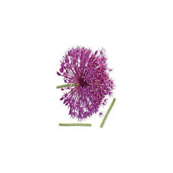 Die Wanddeko mit der leuchtend violetten Blüte ist ein echter Blickfang