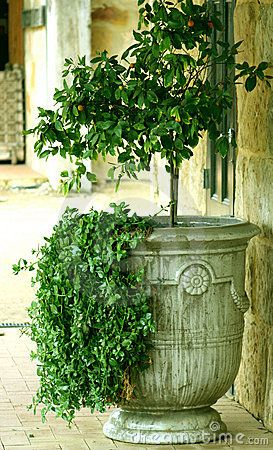 Italian Garden Urn In The Courtyard