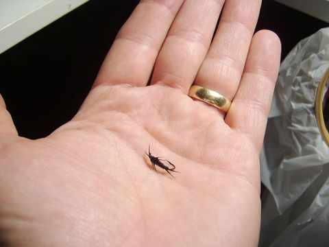 Little Early Black Stonefly Step By Step Nice Way To Tie The