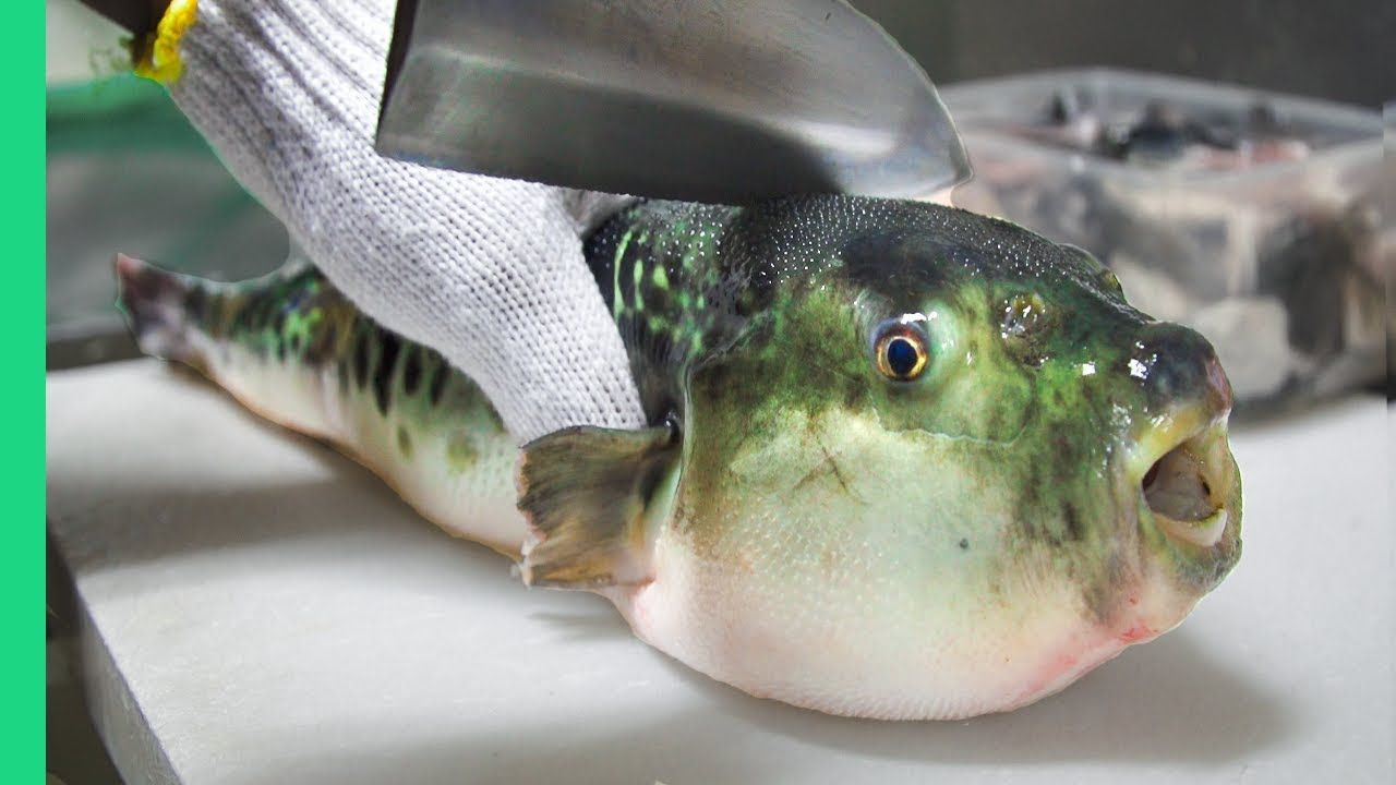 Eating Japan S Poisonous Pufferfish Almost Died Ambulance Puffer Fish Japanese Street Food Bizarre Foods