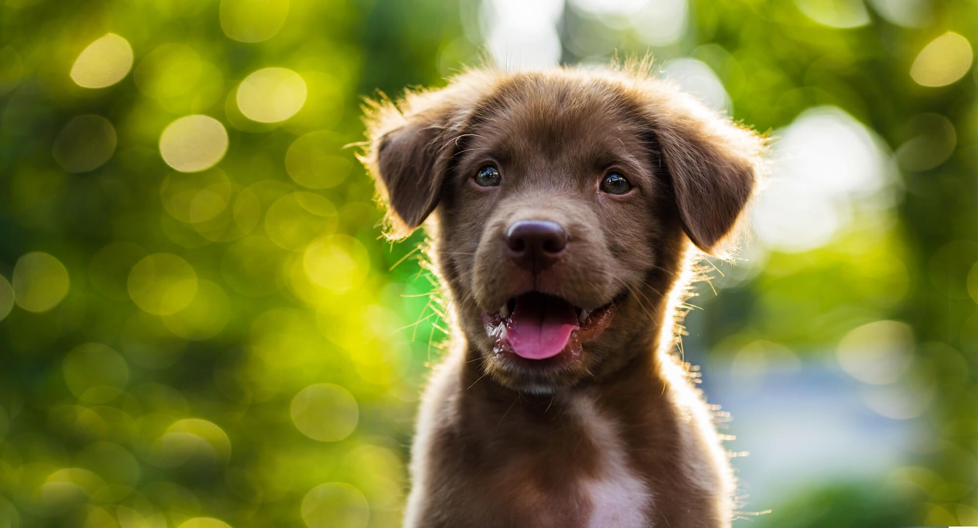 99+ Dogs For Sale Near Me in 2020 Dog friends, Emotional