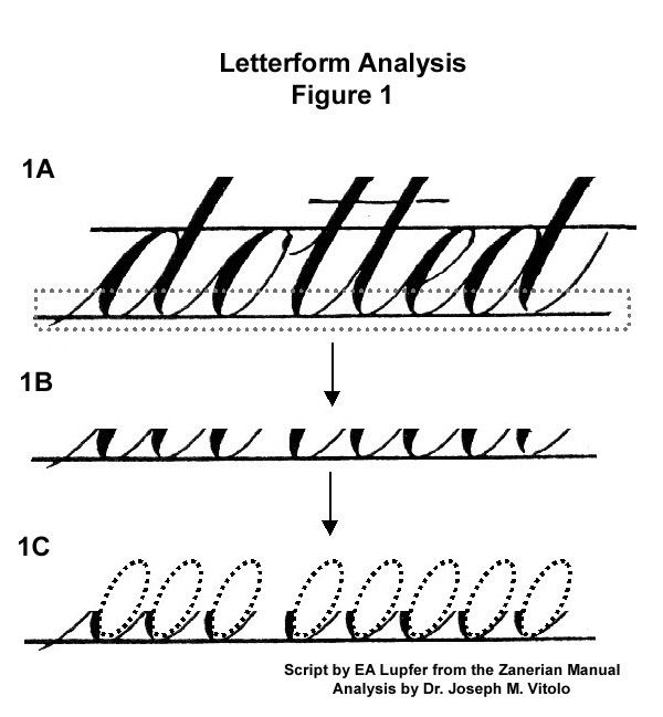 Stem And Loop Example: Letterform Analysis: The Symmetry Of Curves