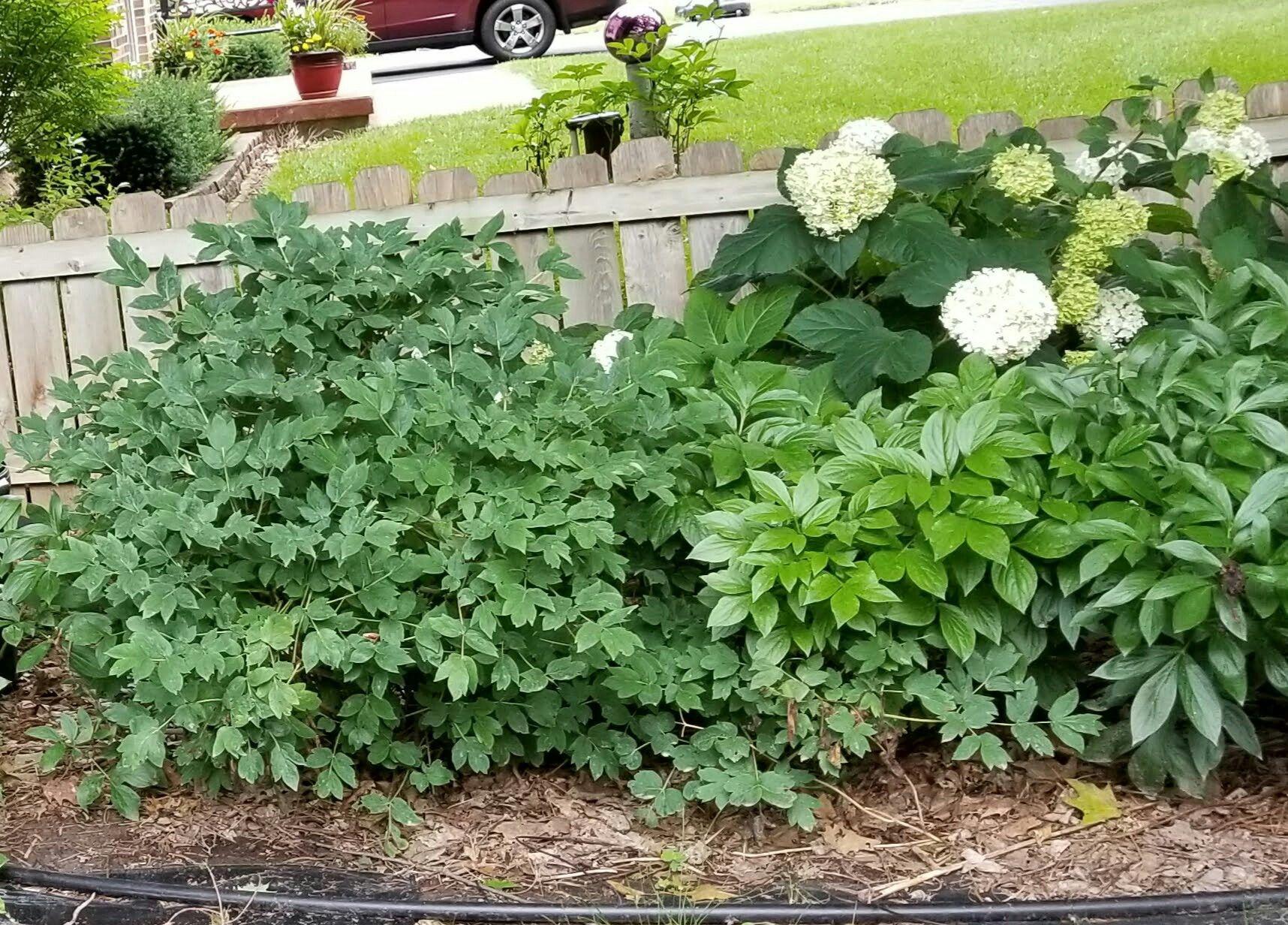 Pin by priscilla s on my zone 5 perennial garden