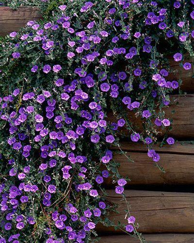 Bare Soil Has No Place In A Gorgeous Garden,