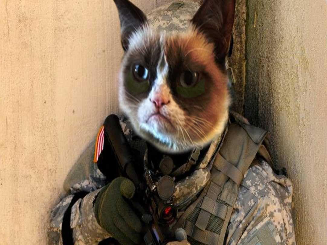 коты бойцы картинки если человек