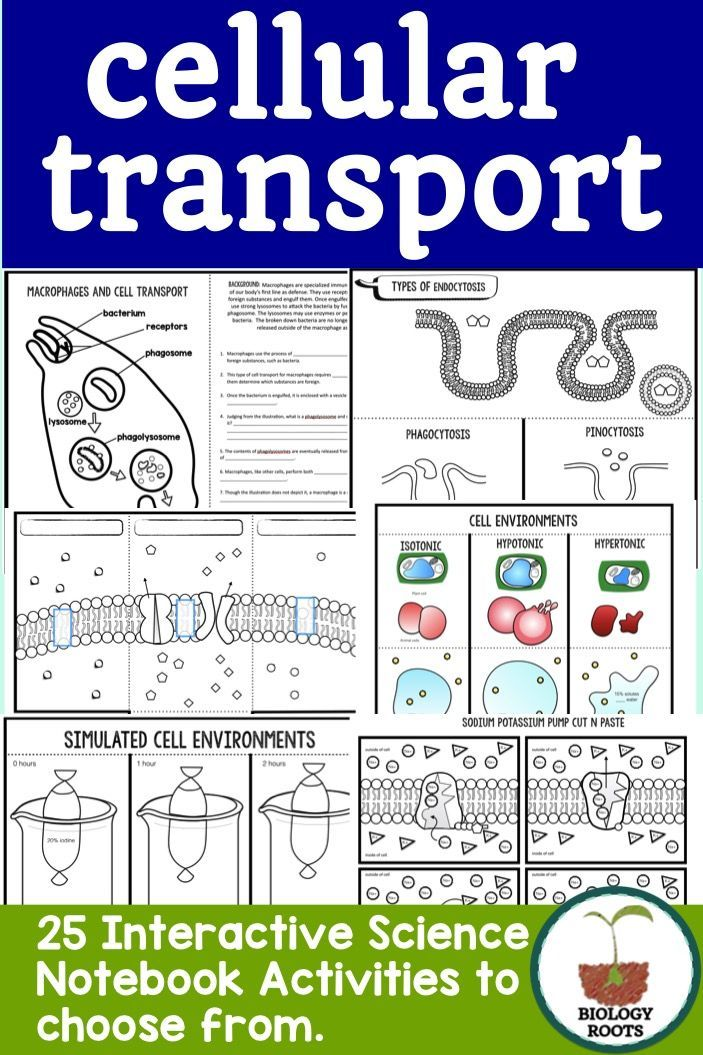 Cell Transport Interactive Notebook Activities Life Science