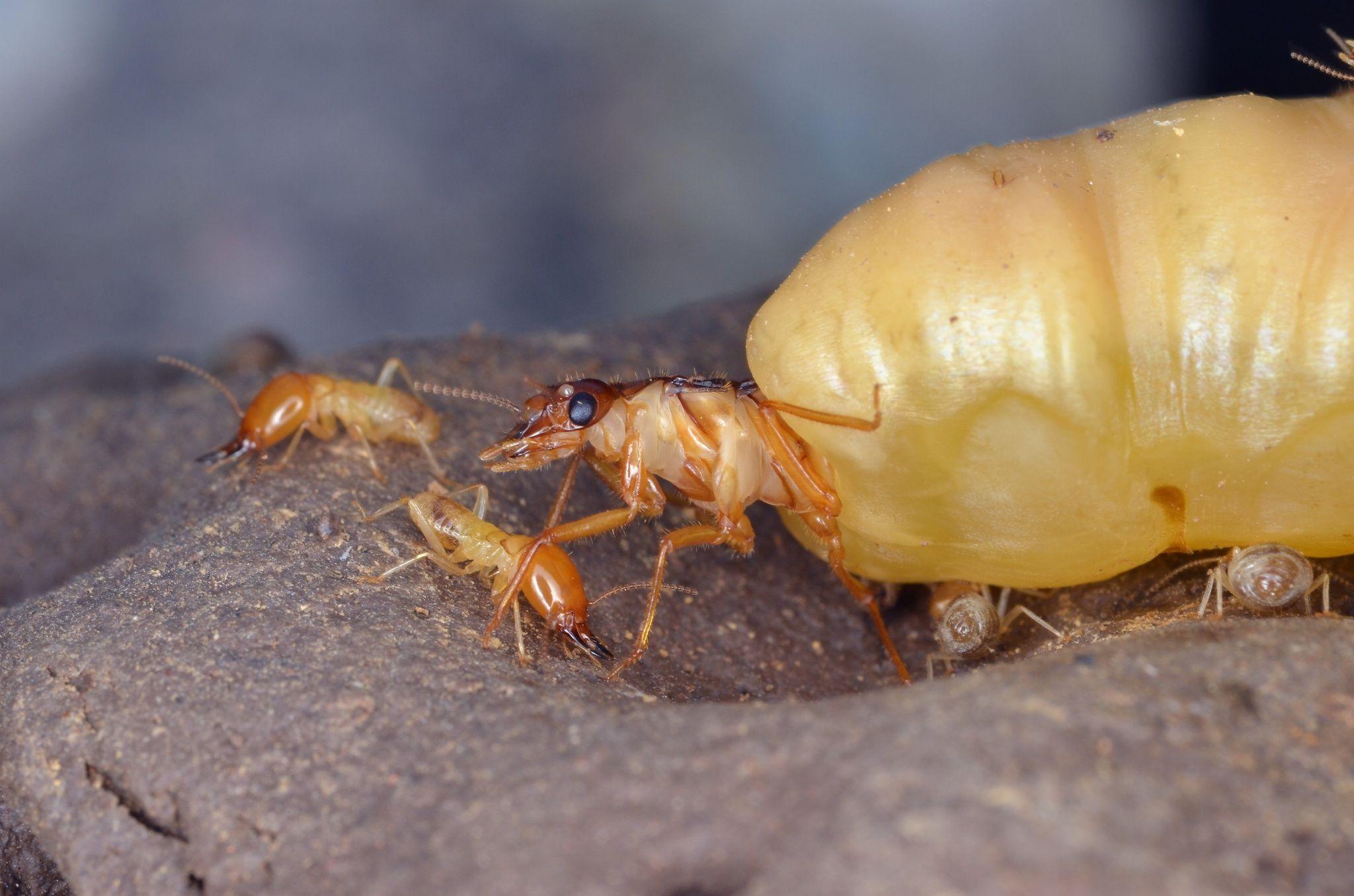 Photo Termite Queen Par Yudy Sauw On 500px In 2018