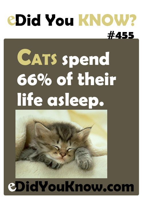 Cats spend 66% of their life asleep.