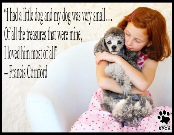 I Had A Little Dog And My Dog Was Very Small Of All The Treasures