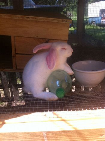 give rabbits bottles of frozen water to keep cool on hot summer days