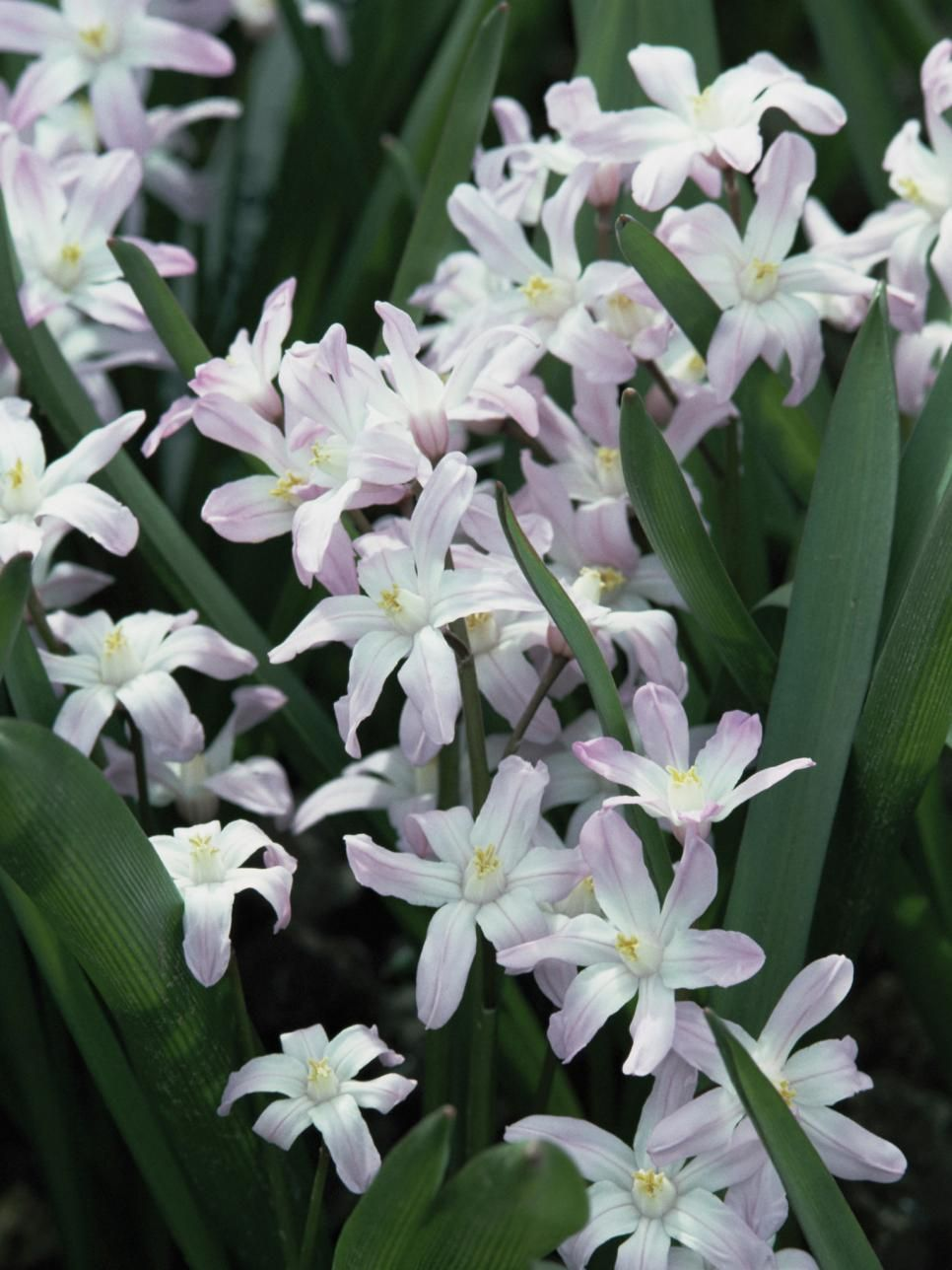 Spring Bulbs To Plant This Fall Spring Flowering Bulbs Spring