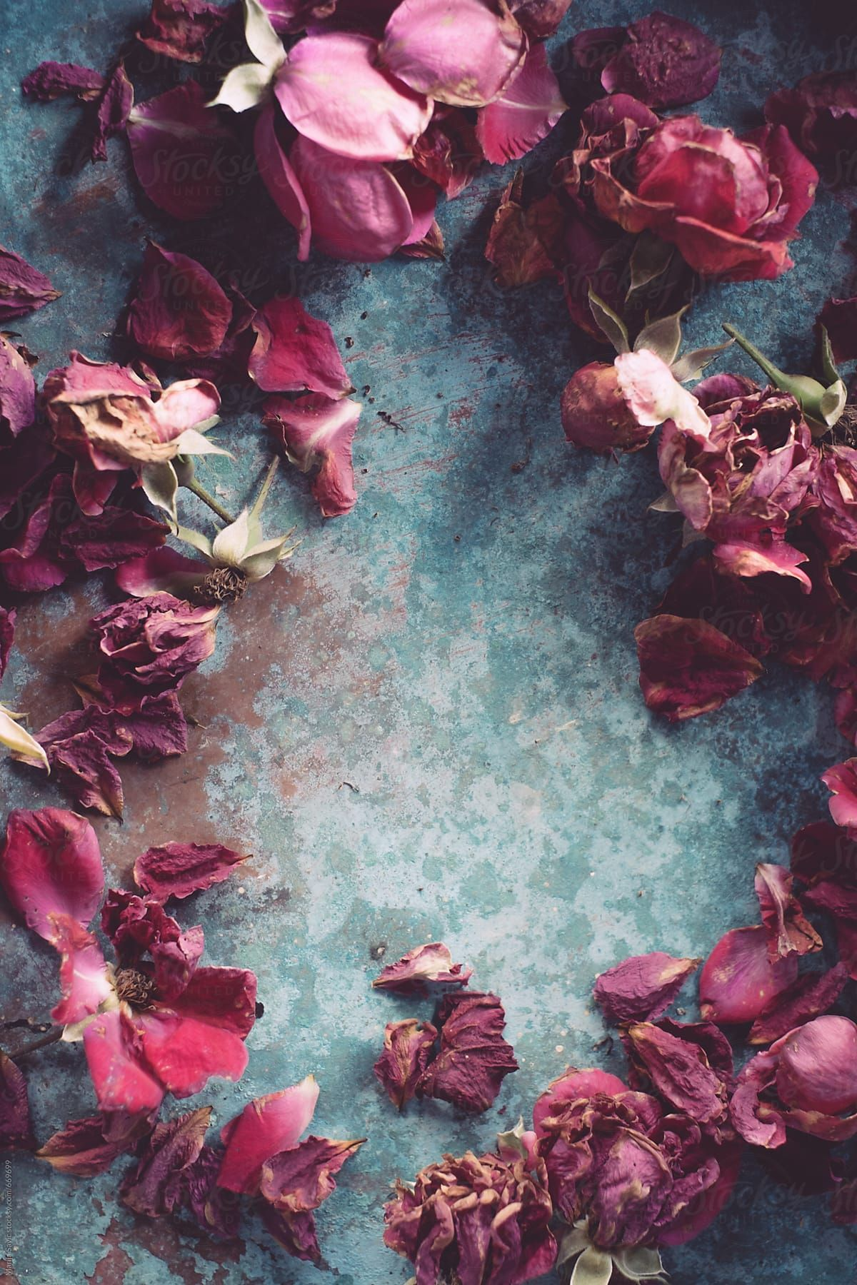 Dry Roses on Blue Metal Surface by Marija Savic for Stocksy United