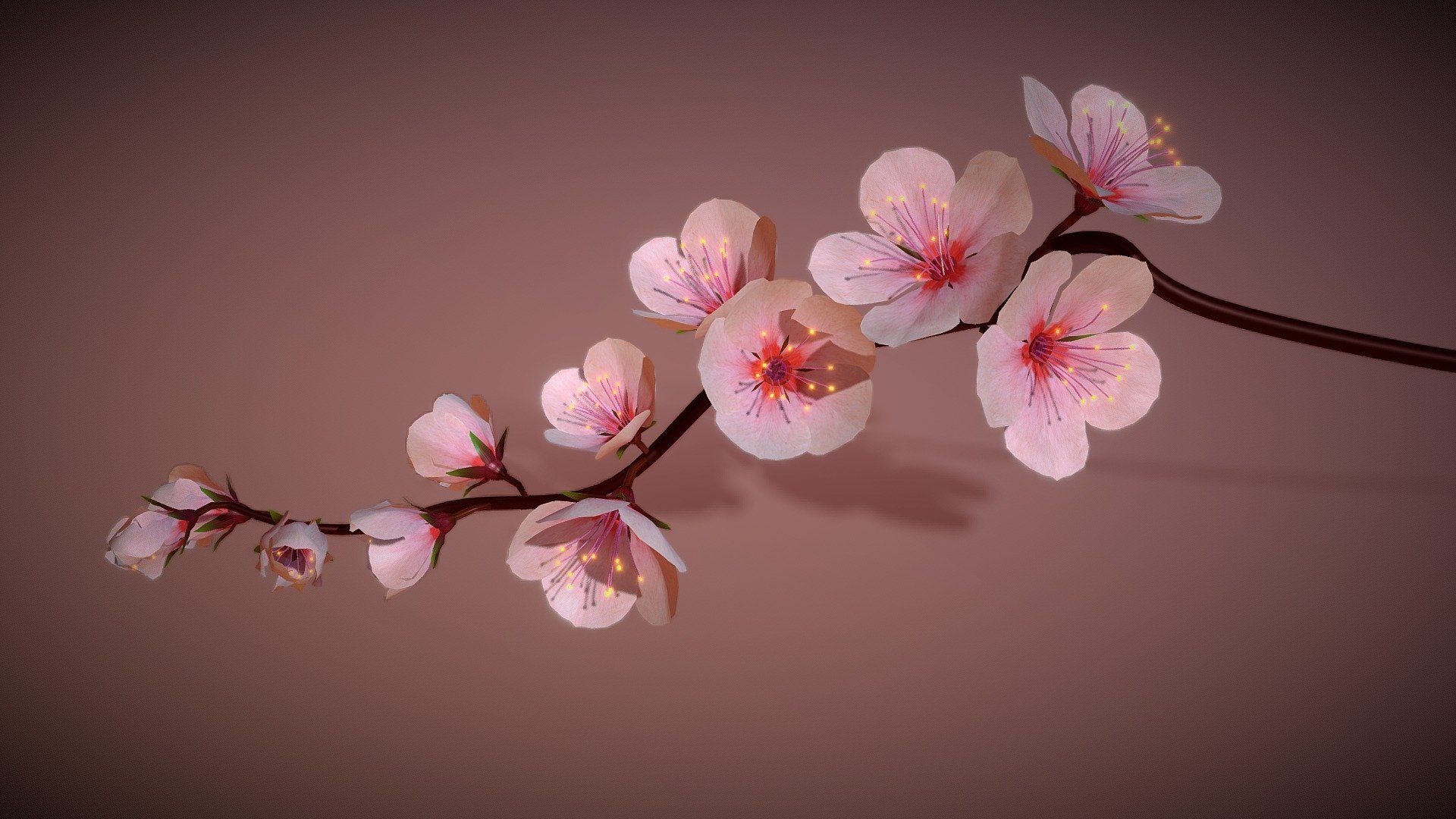 Cherry Blossoms Branch Rigged Animated By Pinotoon Cherry Blossom Branch Cherry Blossom Blossom