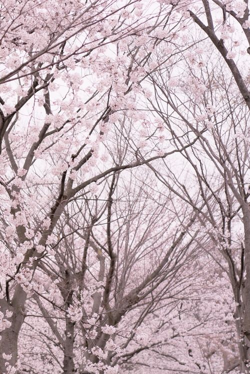 Pin By Stephanie Storm Lariccia On Geo Nature Pretty Trees Pink Nature Beautiful Tree