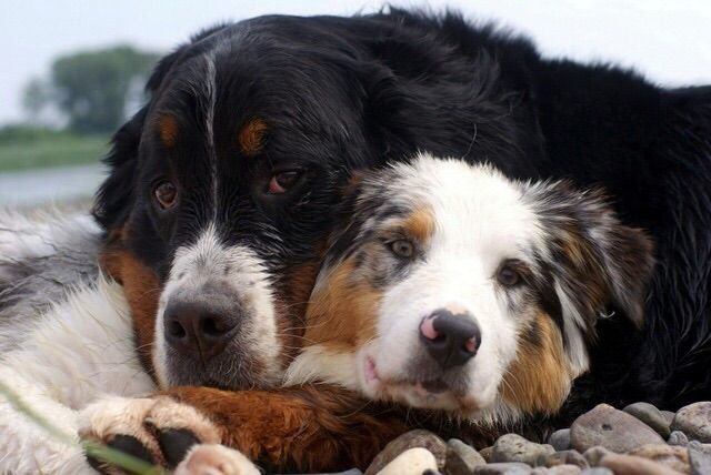 Pin By Ana Brkic On Cute Animals Animals Dogs Cute Puppy Pictures
