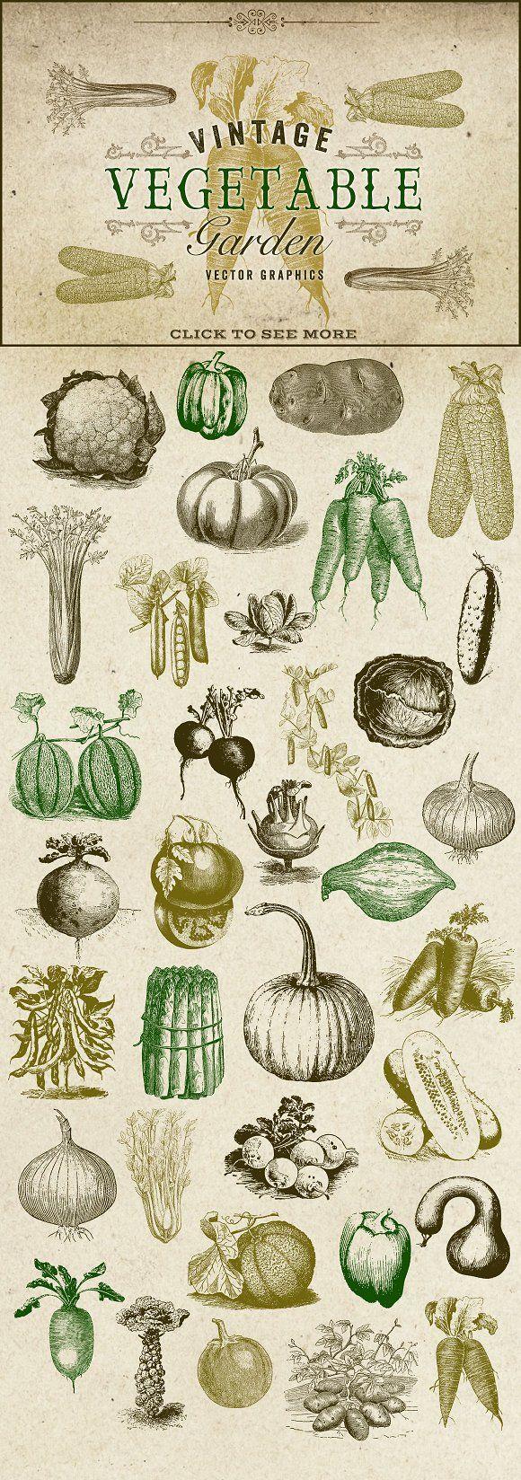 Vintage Vegetable Garden Graphics Vegetable Drawing Vegetable Illustration Vintage Illustration