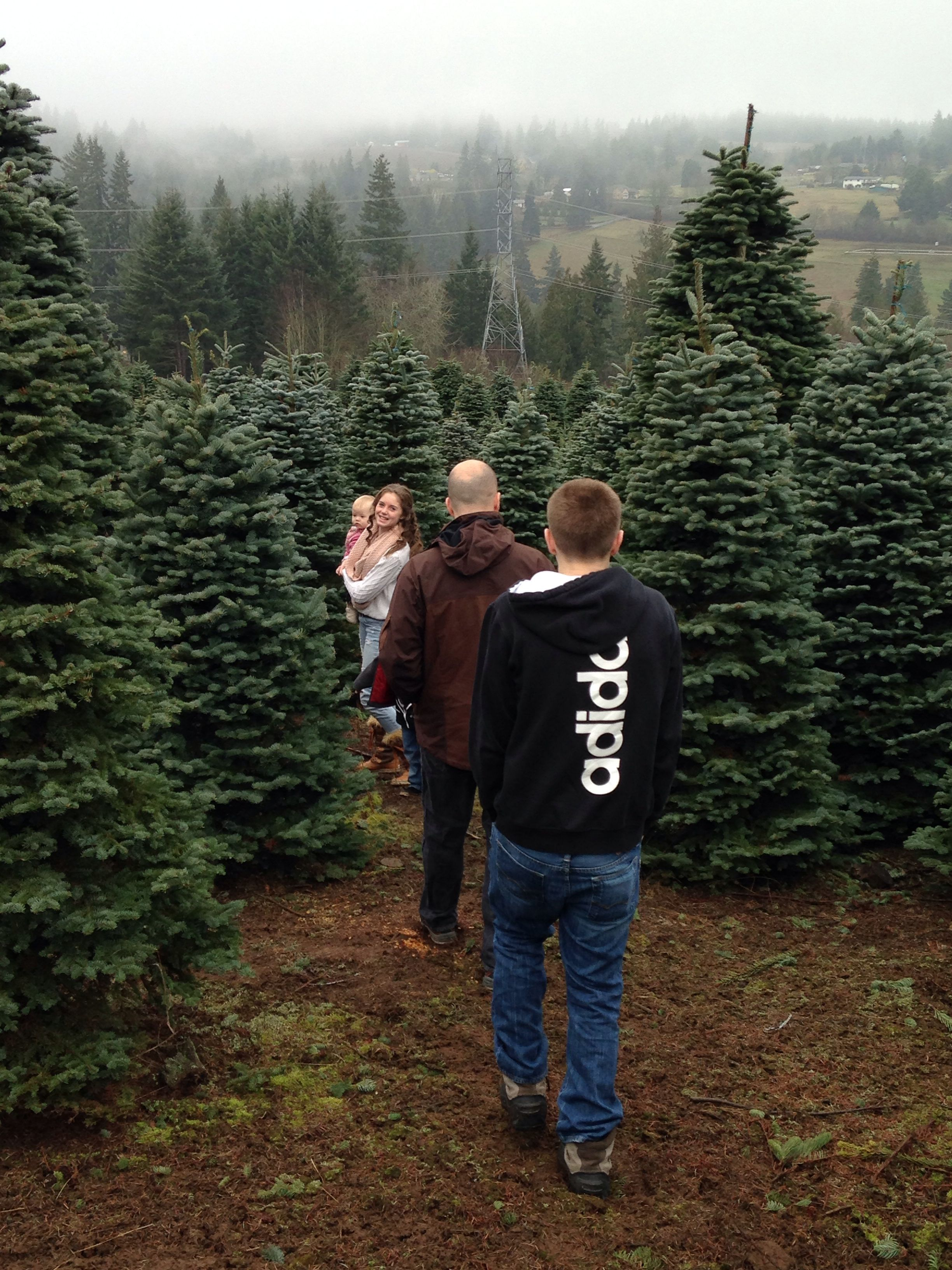 Christmas Tree Hunting At Leach Tree Farm In Sherwood Oregon Family Looks Forward To It Every Year Sherwood Oregon Oregon Tree Farms