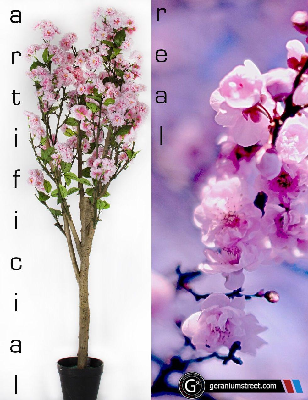 Artificial Cherry Blossom Tree 4 Feet Of Stunning Realistic Beauty Artificial Cherry Blossom Tree Artificial Boxwood Cherry Blossom Tree