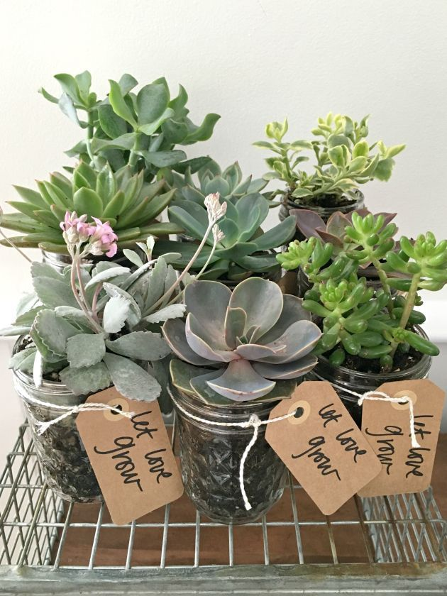 pinterest mason jar bridal shower favors%0A let love grow  succulent guest favors in vintage mason jars