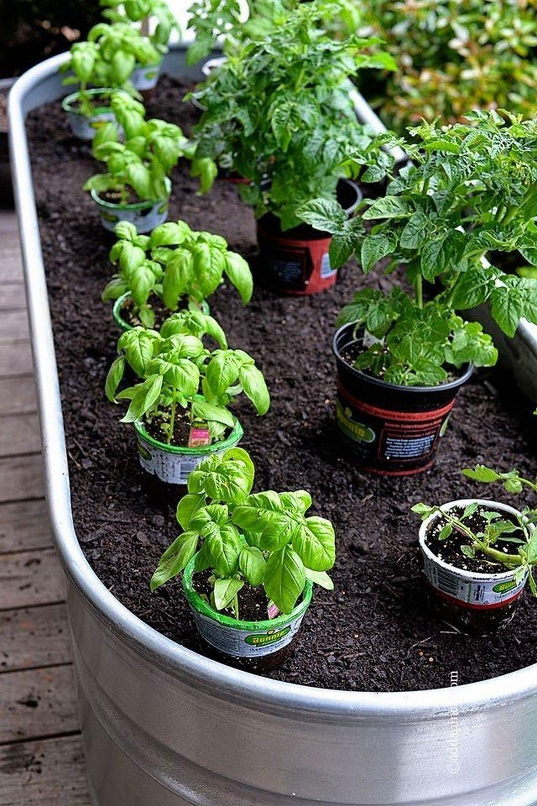 17 Best Container Vegetables Garden for Beginning