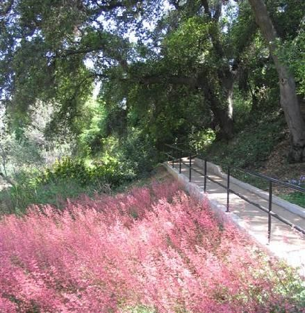 Rancho Santa Ana Botanical Garden In Claremont