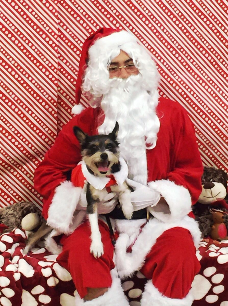 They Had Santa At A Nearby Pet Store Http Ift Tt 2hqftg0 Pet Store Cute Animals Pets