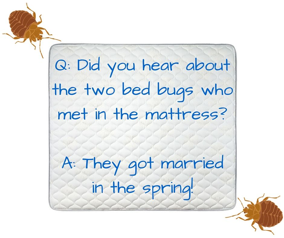 Bed Bug Joke Bugpun Insects Fridaybugfun Lol Jokes Jokes