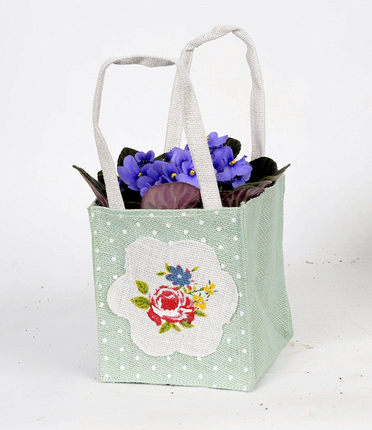 African Violet Gift Bag Ideal Houseplant Gift Pack And Fast
