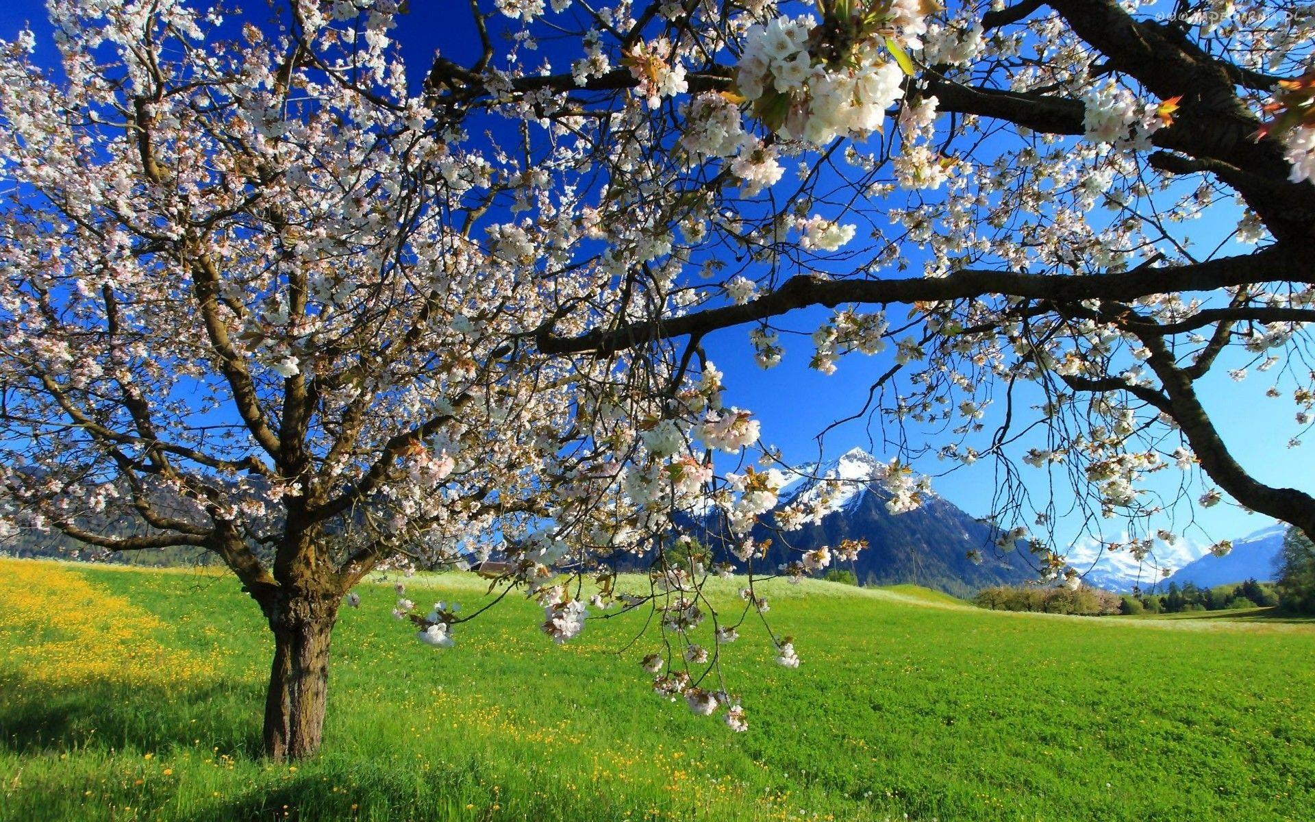 Wiosna Kwitnace Owocowe Drzewa Gory Laka Spring Landscape Spring Images Landscape Wallpaper