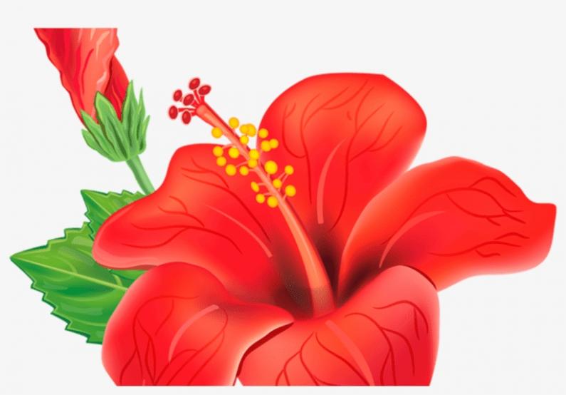 11 Unbelievable Facts About Gumamela Cartoon In 2020 Flower Painting Flower Clipart Flower Art