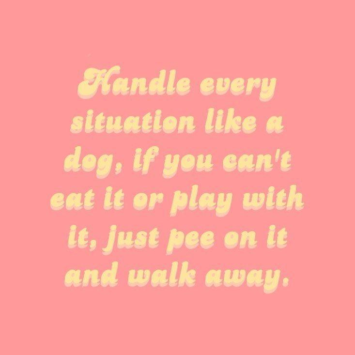 How to fix your problems • • • -      How to fix your problems🤣🐶 • • • #smallbusiness #smallshop #shopsmall #petaccessories  #fix #petaccessories #problems #shopsmall #smallbusiness