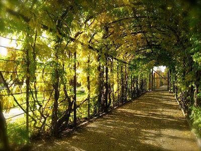 Autumn Schoenbrunn Palace Garden Walkway   martha's vienna: Schönbrunn Palace Gardens in Autumn