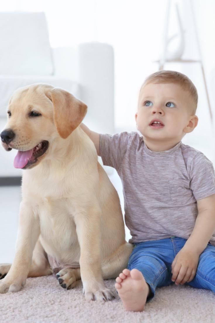 Cute Child With Labrador Retriever At Home Labradorretriever Golden Retriever Labrador Labrador Puppy Labrador