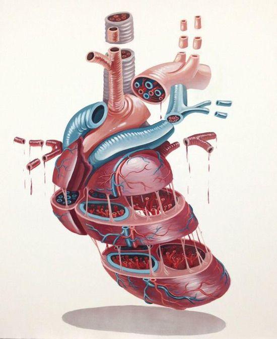 Heart by NYCHOS   Art   Pinterest   Anatomie und Medizin