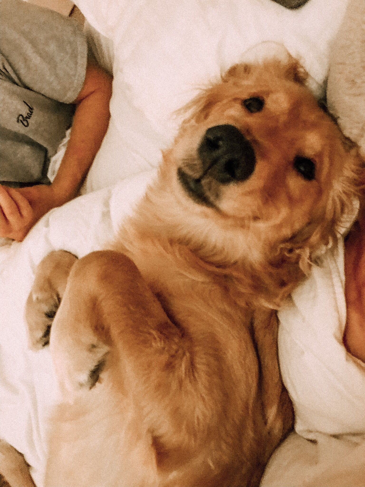 Tiffanyyvincent Com Fluffy Animals Cute Dogs Cute Animal Pictures
