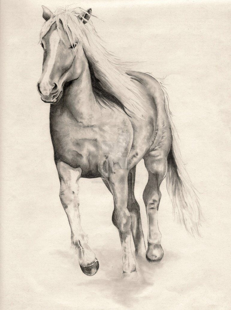 Popular Wallpaper Horse Deviantart - 0ac5de4b957627bde03f1c9ee3551b07  Pic_76755.jpg
