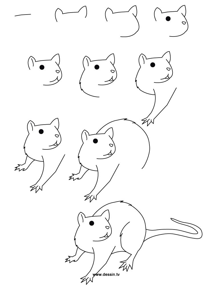 Step By Step Drawing Animals  Learn How To Draw A Rat With Simple Step By